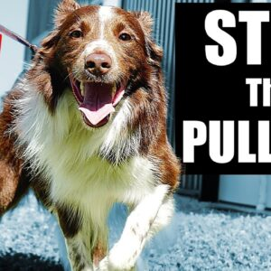 5 Quick Tips To Stop Your Dog From Pulling On The Leash