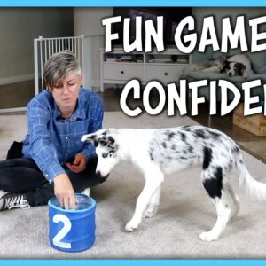 Confidence Game - Put It In!
