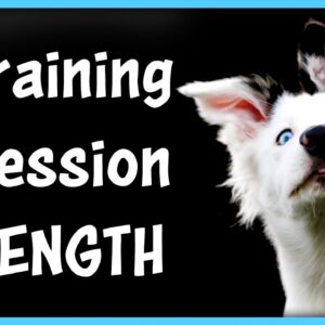 How Long Should You Train Your Dog?