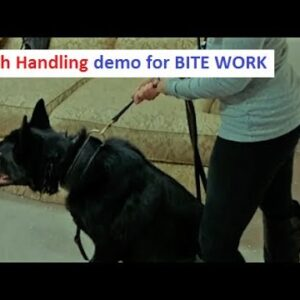 Leash Handling during Bite Work (K9-1.com)