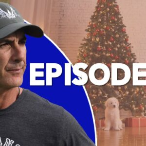 Christmas Puppies - a BAD Idea - Robert Cabral Dog Training Podcast Episode 32