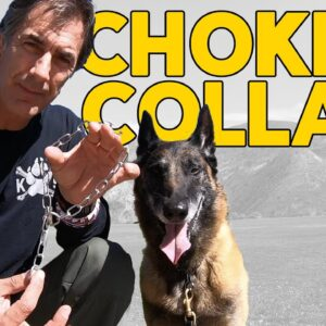 Most Important Things to Know about a Choke Collar - Robert Cabral Dog Training Video