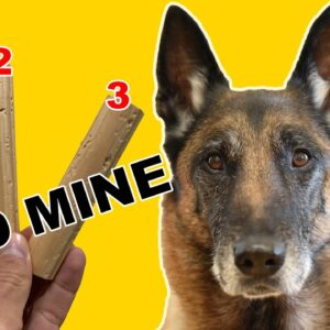 Teach Your DOG SCENT DETECTION - Basic Scent Training #1