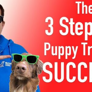 The 3 Most Important Steps To Teach Your Dog ANY Skill!