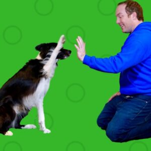 Boarding Your Dog- What You Need To Know