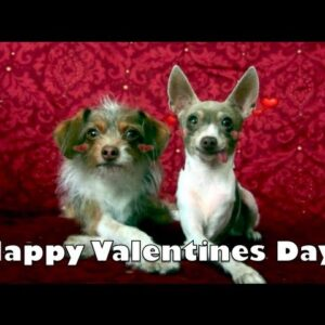 Happy Valentines Day Card- Puppy Love