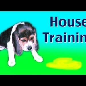 House training a puppy or rescue dog