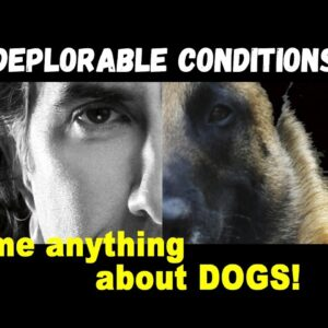 Rescuing Dogs from Deplorable Conditions - Dog Training Video podcast