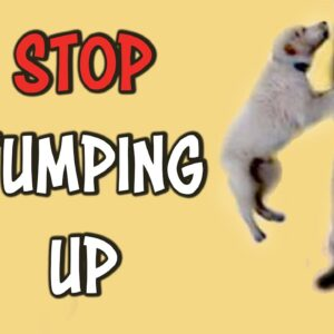 STOP jumping up!
