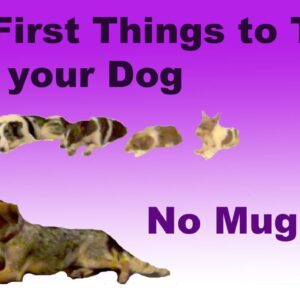 The most important things to train your dog- No Mugging!