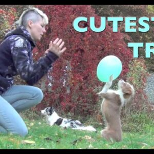 Tugs ballon trick- one amazing dog trick