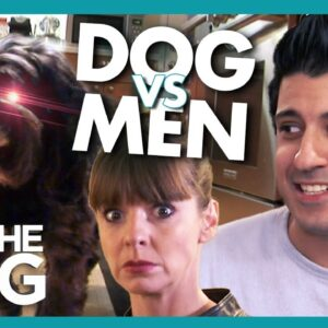 Self-Appointed Guard Dog HATES Male Visitors | It's Me or The Dog