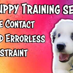 Puppy Training session - Eye contact and Errorless Restraint